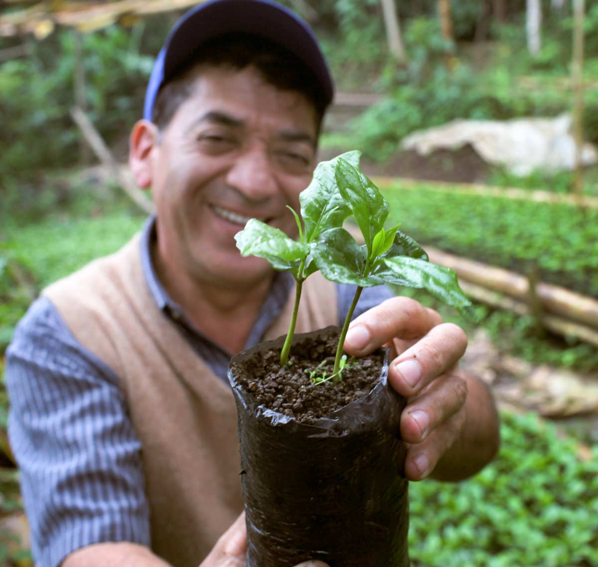 Farmer Holding an Organic Coffee Plant